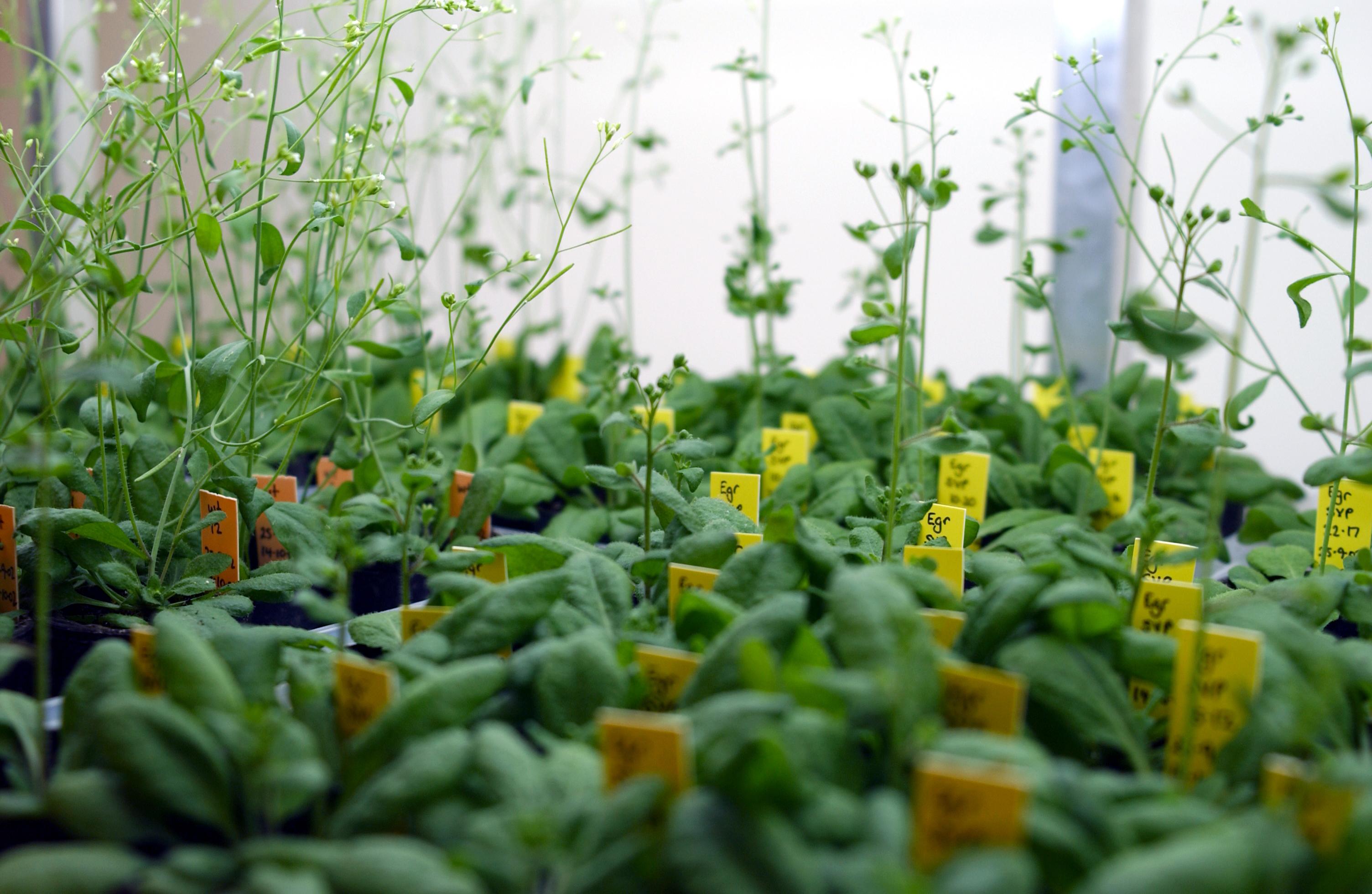 Les plantes sont elles des animaux comme les autres le for Site de plante