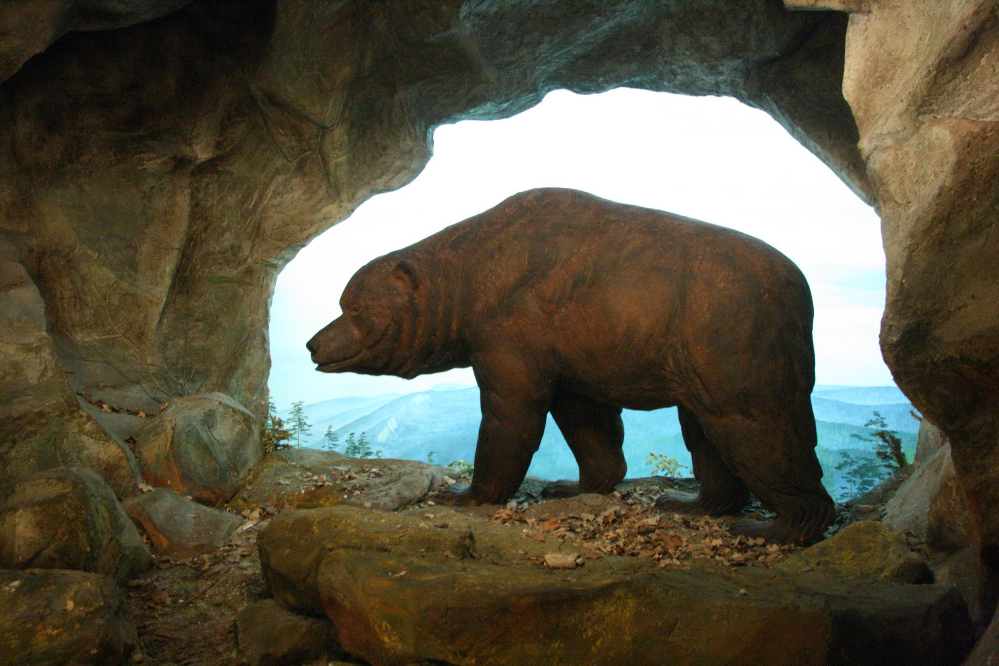 l ours des cavernes victime d un r gime v g tarien trop exclusif le temps. Black Bedroom Furniture Sets. Home Design Ideas