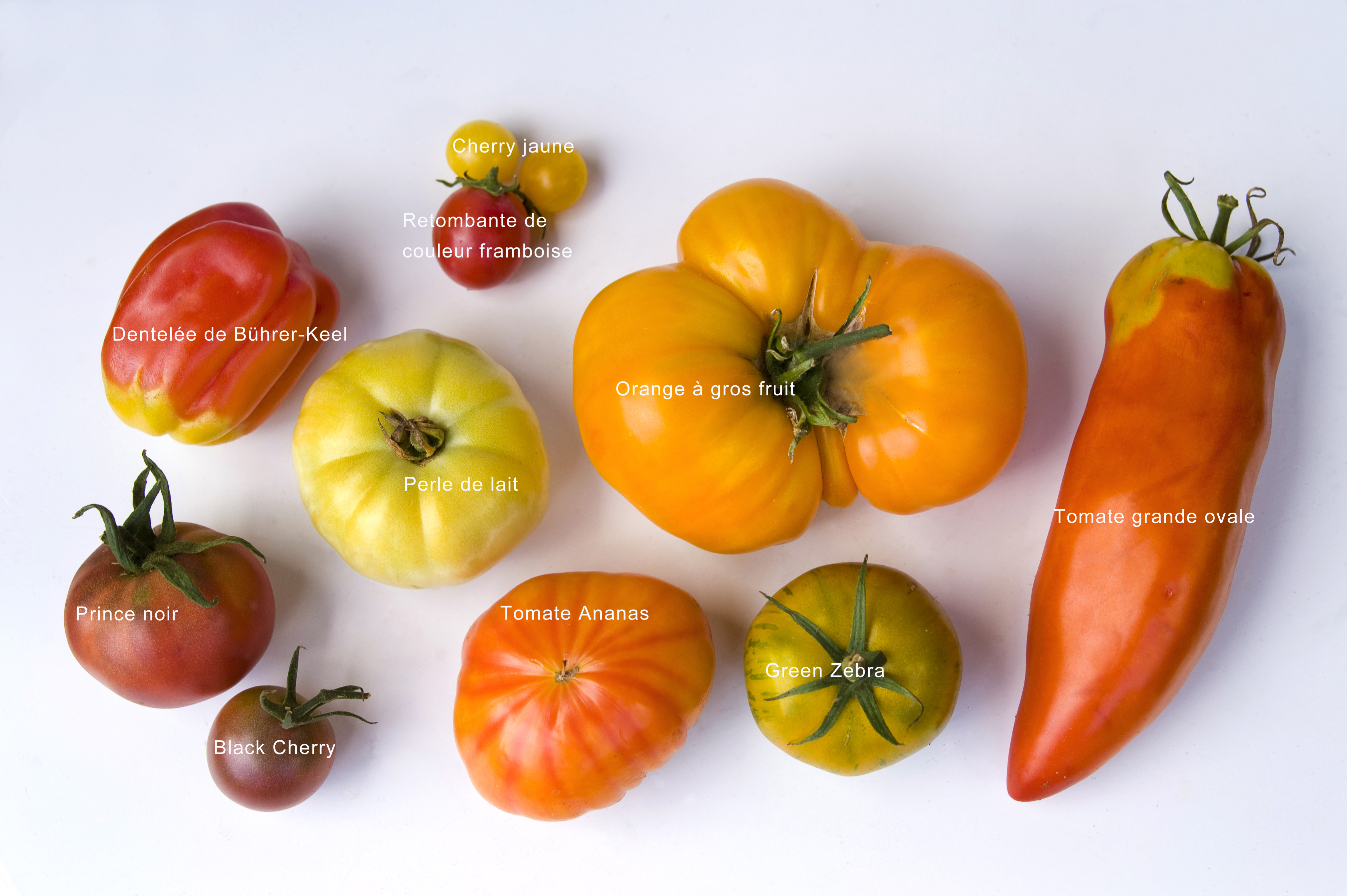 Tomates hors la loi l gumes en r sistance qui d cide de for Noctuelle de la tomate