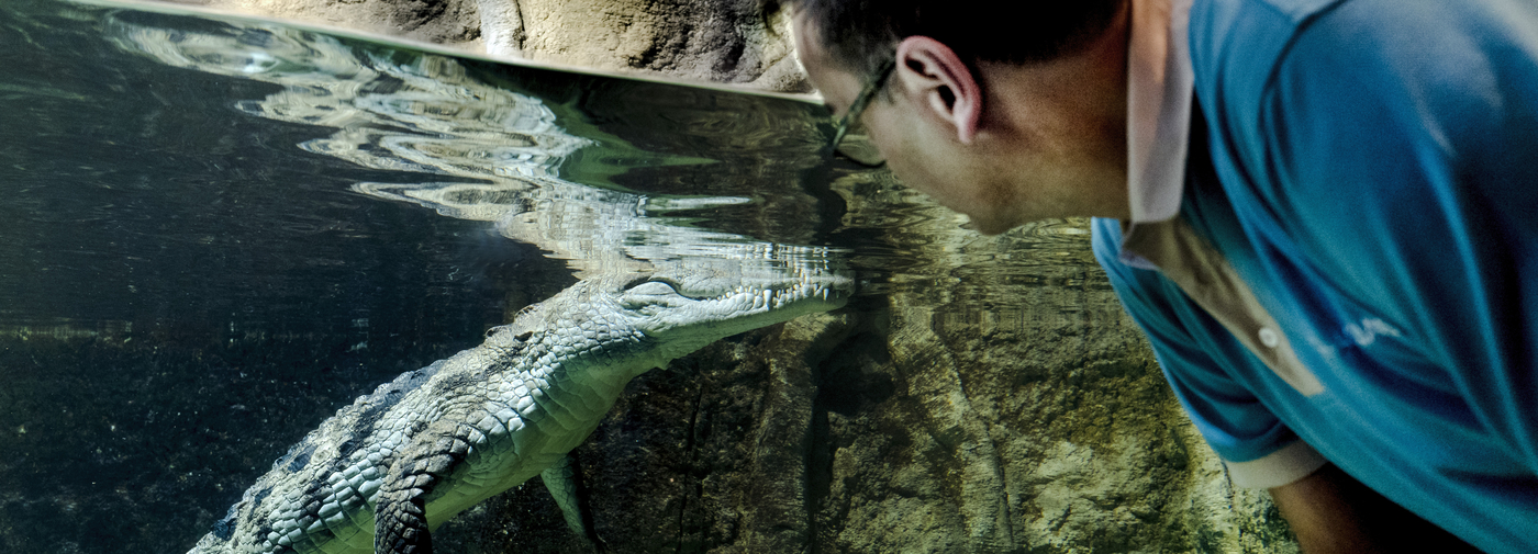 Michel Ansermet, l'homme qui craque pour les crocos