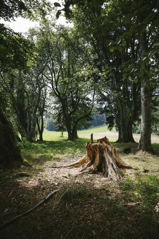 L 39 homme qui coute battre le c ur des arbres le temps - Jeux de tronconneuse qui coupe les arbres ...