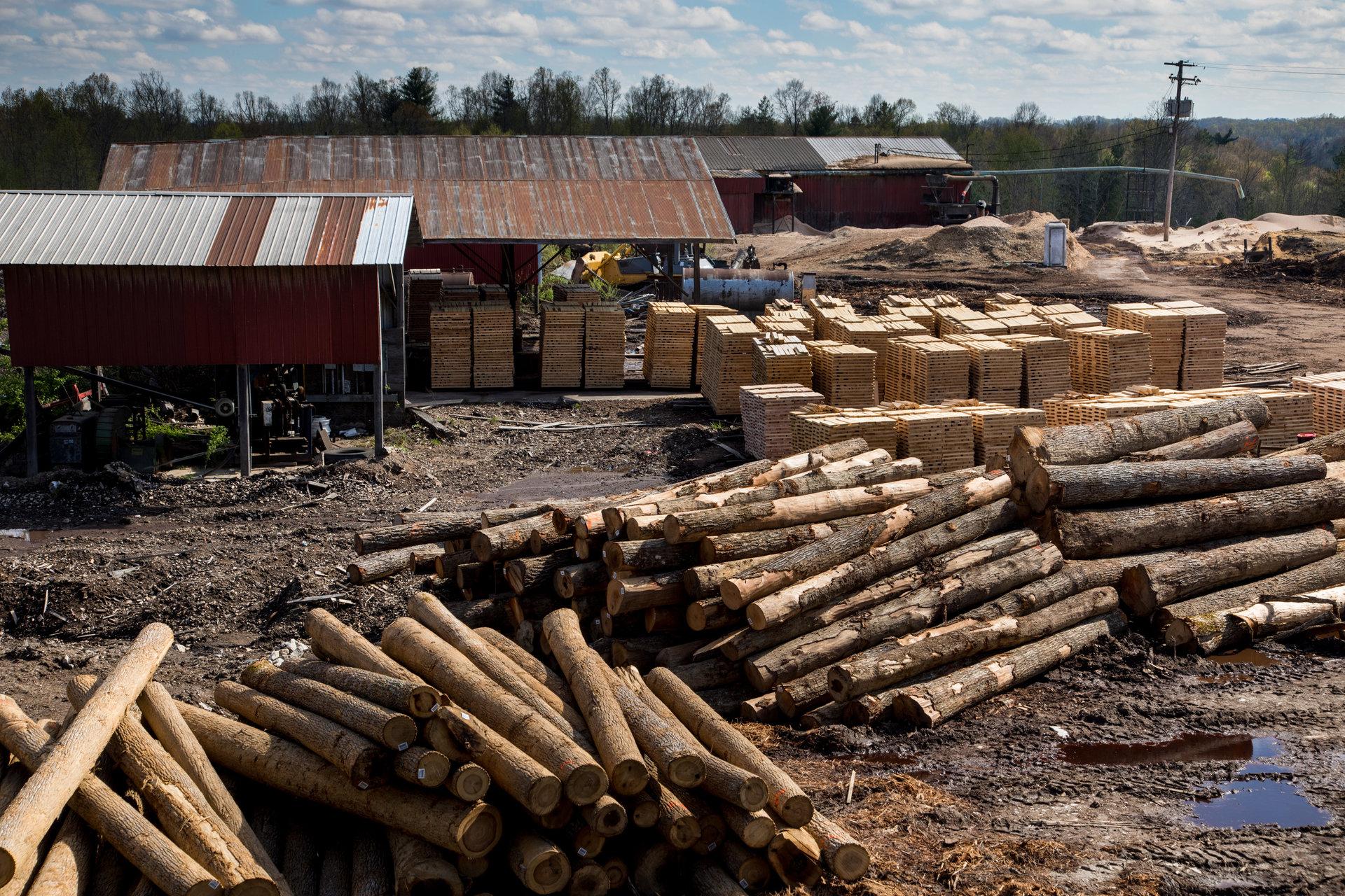 Peu d'exploitations forestières subsistent à Beattyville.
