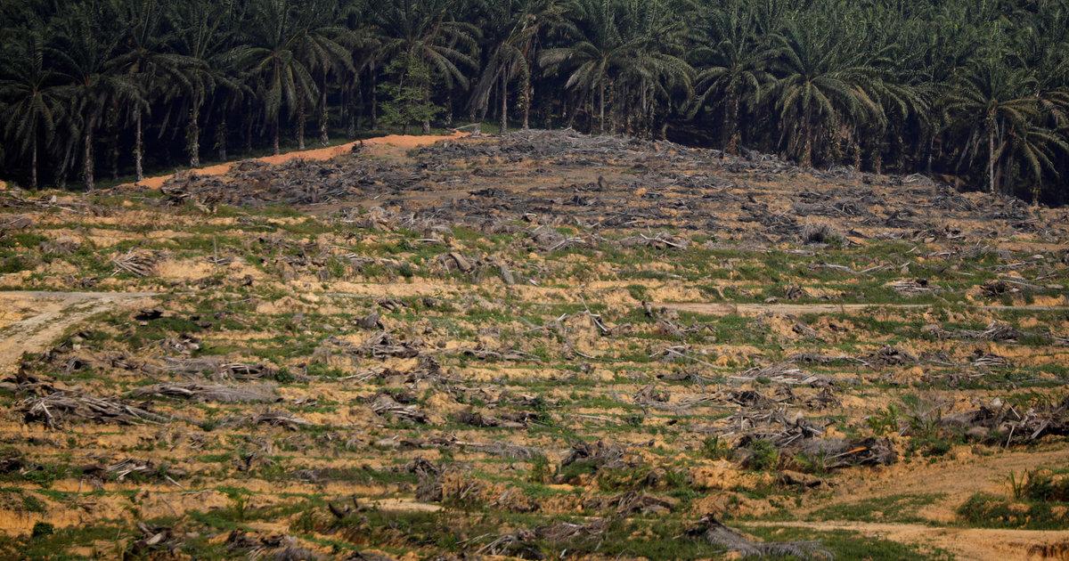 Multinationales: les volumineux rapports de durabilité ne pèsent pas lourd